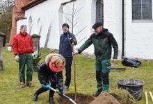 Robert Knoerk (von links), Pastorin Silke Noormann, Michael Hemme und Joachim Steinmetz pflanzten vor St. Georg einen besonderen Apfelbaum. Foto: Anke Wiese